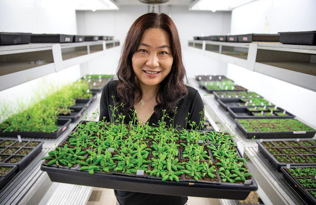 Xuehua Zhong, associate professor of genetics, holding plants